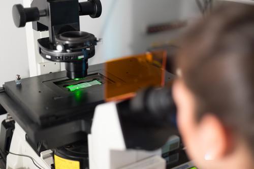 Biowissenschaftlerin, die im wissenschaftlichen Labor mikroskopiert. Gesundheitswesen Medikament Erfolg Wissenschaften Studium Prüfung & Examen