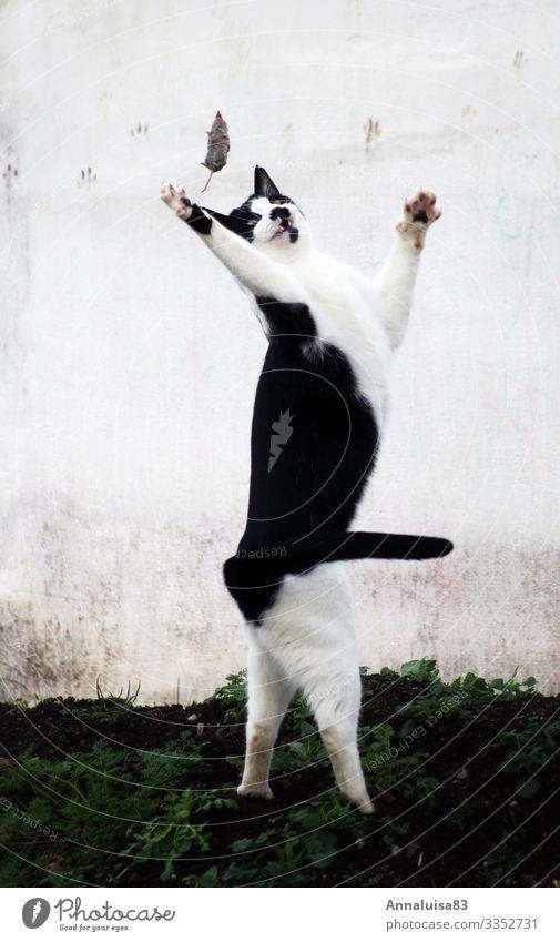 Die erste Maus gefangen Katze Gesunde Ernährung Tier Essen Umwelt Glück Garten Spielen Erfolg Abenteuer Neugier Macht Frühstück Haustier Jagd