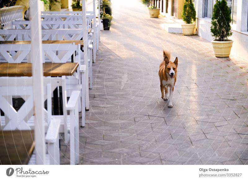 Glücklicher Hund auf der Straße der Stadt. Wunderschöner Hintergrund. Tiergesundheit Freude Sommer Sonne Pflanze Frühling Schönes Wetter Baum Park Terrasse