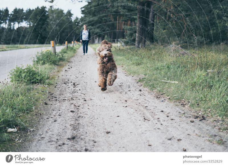 Run Run Baby Mensch feminin Frau Erwachsene 1 45-60 Jahre Umwelt Natur Schönes Wetter Gras Wald Tier Haustier Hund Bewegung Unendlichkeit braun grau grün