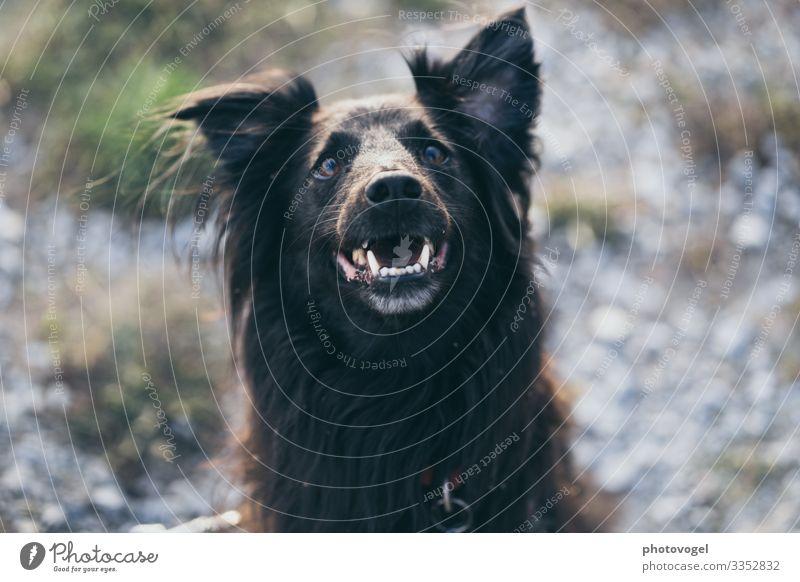 Lächelnder Vierbeiner Umwelt Natur Pflanze Schönes Wetter Sträucher Tier Haustier Hund 1 beobachten Freundlichkeit Fröhlichkeit grün Gefühle Stimmung Freude