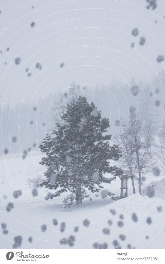Eiszeit | am Besten von Innen erleben Natur Winter Frost Schnee Schneefall Pflanze Baum Wald-Kiefer kalt natürlich Sturm Schneelandschaft Farbfoto