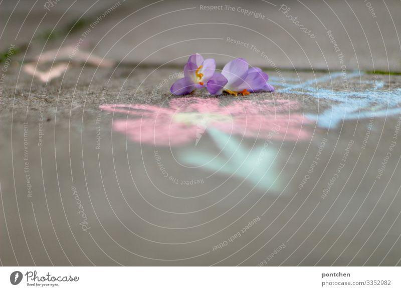 Lila Blumen auf Asphalt, der mit Blumen aus Straßenkreide bemalt ist Freizeit & Hobby Spielen zeichnen Kreide malen Kinderspiel violett Blüte Pflastersteine