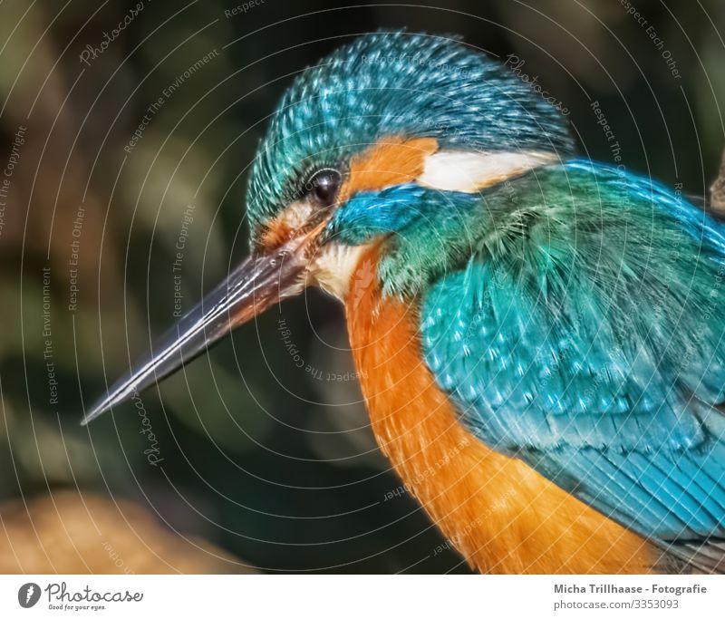 Eisvogel Portrait Umwelt Natur Tier Sonne Sonnenlicht Schönes Wetter Seeufer Flussufer Wildtier Vogel Tiergesicht Flügel Eisvögel Schnabel Kopf Auge Feder