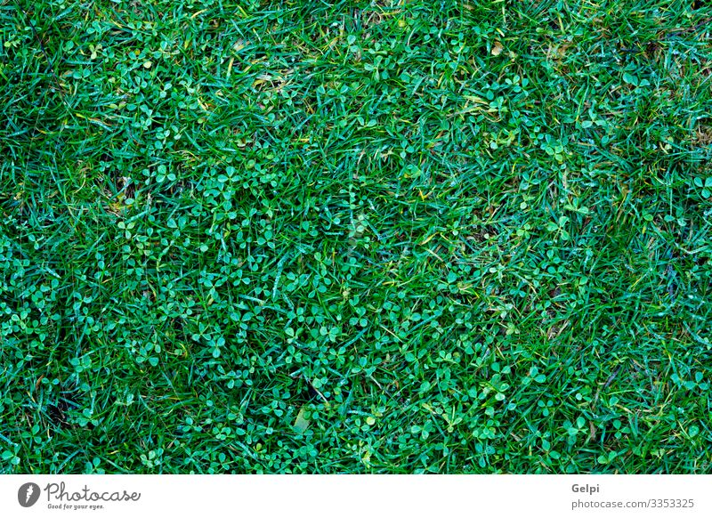 Natur Pflanze grün Blatt Umwelt natürlich Gras Garten Dekoration & Verzierung Park frisch Wachstum geschlossen Schutz Klettern dick