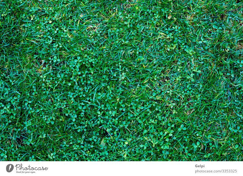 Vertikaler grüner Garten Dekoration & Verzierung Tapete Klettern Bergsteigen Umwelt Natur Pflanze Gras Blatt Park Wachstum dick frisch natürlich Schutz Wand