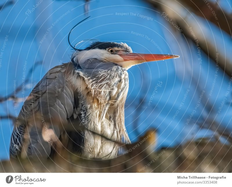 Reiher hoch oben im Baum Natur Tier Himmel Sonnenlicht Schönes Wetter Zweige u. Äste Seeufer Flussufer Wildtier Vogel Tiergesicht Flügel Graureiher Schnabel