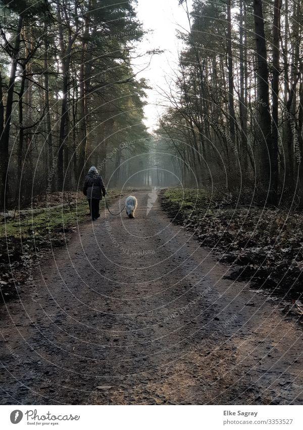 Waldspaziergang am Morgen Mensch feminin Frau Erwachsene Weiblicher Senior 1 60 und älter Natur Landschaft Pflanze Tier Erde Winter Haustier Hund laufen wandern