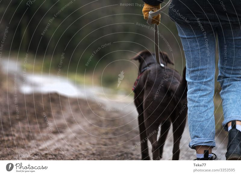 #Gassi gehen Winter Tier Haustier Hund 1 Abenteuer Zufriedenheit Wald Waldspaziergang Farbfoto Außenaufnahme