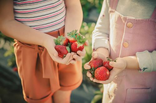 Kinder halten Erdbeeren in ihren Handflächen auf einem Erdbeerfeld Frucht Dessert Ernährung Essen Frühstück Diät Freude Glück Sommer Garten Mensch Finger