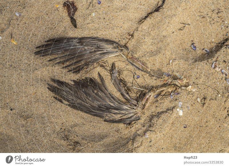 Flügel einer gestorbenen Möwe Sand Frühling Sommer Küste Strand Tier Totes Tier Vogel 1 braun gelb Tod Vergänglichkeit verlieren Knochen Rest verrotten Farbfoto