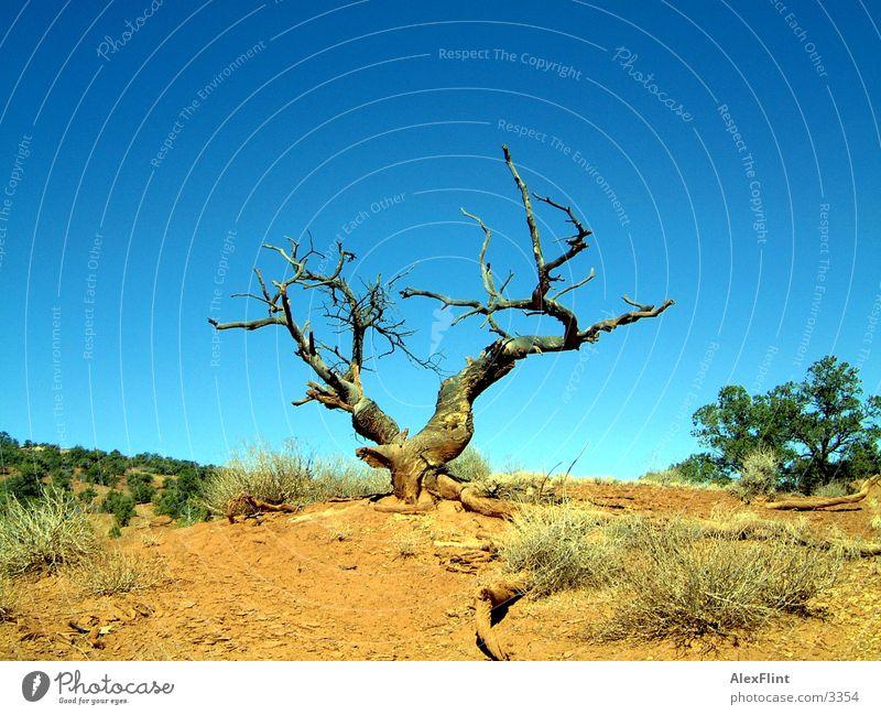 wuestenbaum Baum trocken Wüste