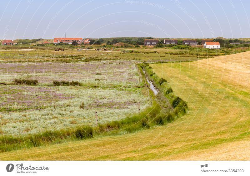 Spiekeroog in East Frisia Sommer Insel Landschaft Pflanze Sträucher Küste Dorf authentisch Ostfriesland Landkreis Friesland deutschland norddeutschland