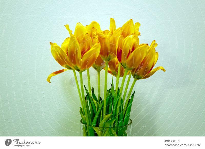 Tulpen Natur Pflanze Blume ruhig gelb Blüte Frühling Garten Textfreiraum orange gold Blühend Blumenstrauß Stengel Blütenblatt welk