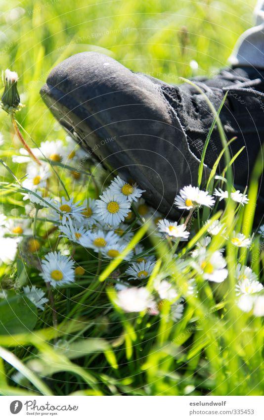 Natur in Gefahr Umwelt Pflanze Frühling Sommer Gänseblümchen Wiese Schuhe Wanderschuhe laufen kaputt grün gefährlich ignorant Umweltschutz Umweltschaden