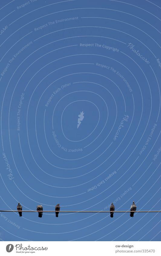 Freilufthaltung Umwelt Luft Himmel Wolkenloser Himmel Schönes Wetter Tier Vogel Taube Tiergruppe Herde Schwarm Tierfamilie beobachten Erholung Kommunizieren