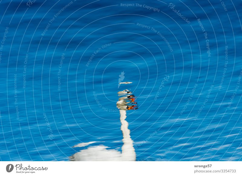 Spiegelbild eines Schwanes Spiegelung im Wasser Reflexion & Spiegelung See Wasseroberfläche Reflektion Tier Farbfoto Vogel Menschenleer Tag blau weiß
