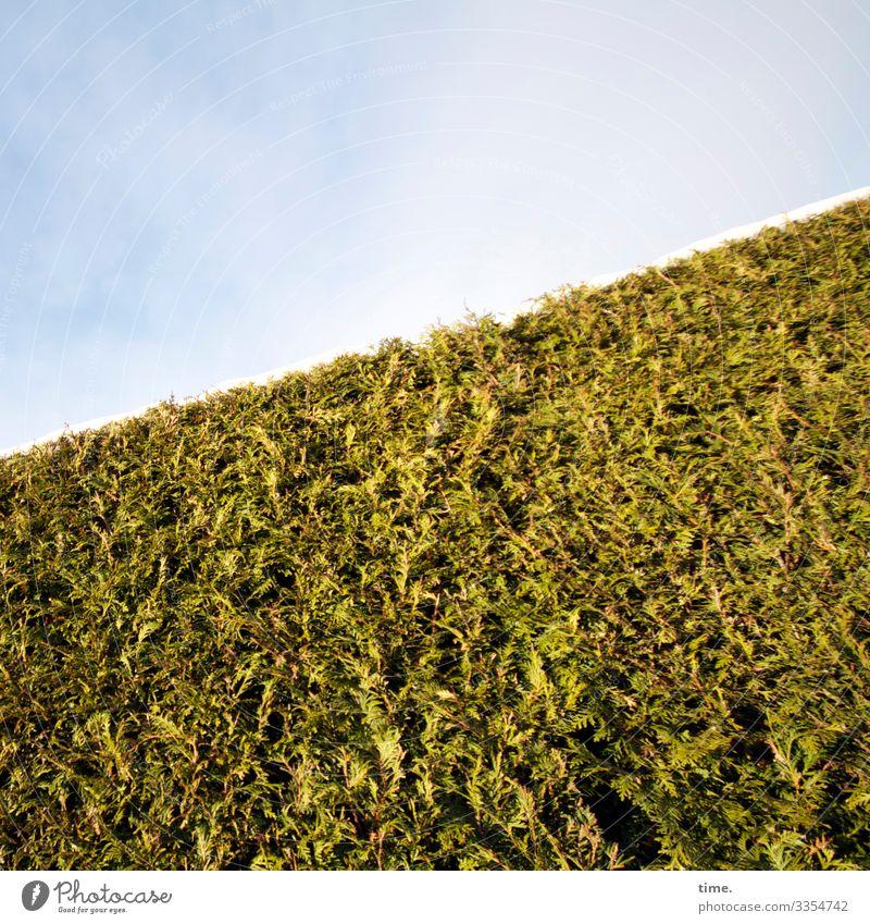 Eiszeit | enthält Spuren von Schnee Himmel Wolken Winter Schönes Wetter Pflanze Hecke Lebensbaum Immergrüne Pflanzen Wachstum hoch Kraft Sicherheit Schutz