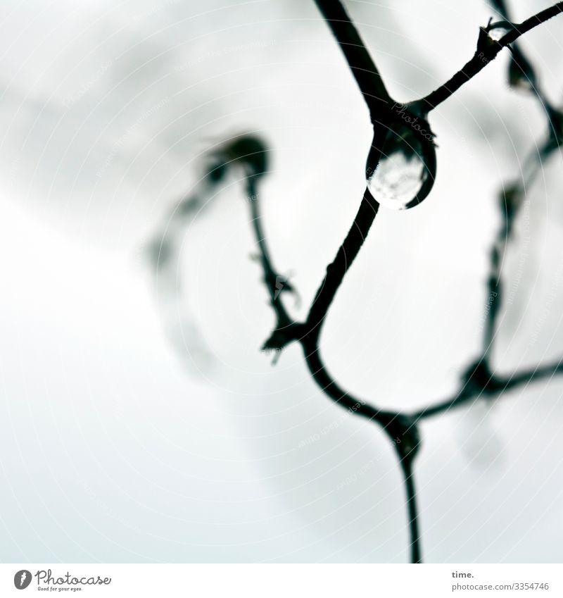 frozen dance | Eiszeit Wassertropfen Winter Frost Schnee Pflanze Ast hängen Tanzen kalt Leidenschaft Leben Ausdauer standhaft Bewegung entdecken Erwartung