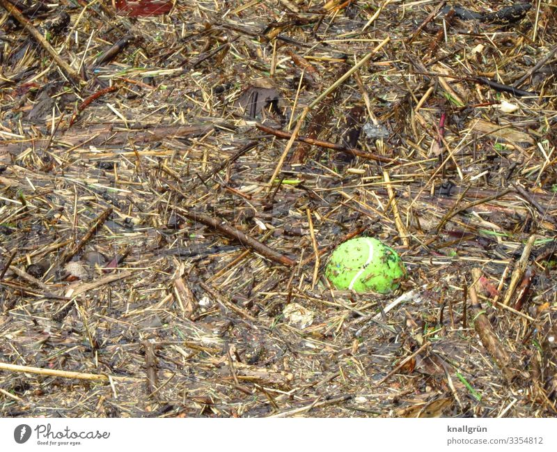 Treibgut Natur Wasser gelb Umwelt Schwimmen & Baden braun dreckig Wasseroberfläche Umweltverschmutzung Strandgut Tennisball