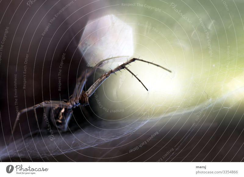 Bäh | Spinnenalarm Profil Ganzkörperaufnahme Tierporträt Zentralperspektive Schwache Tiefenschärfe Gegenlicht Sonnenlicht Lichterscheinung Kontrast Tag Morgen