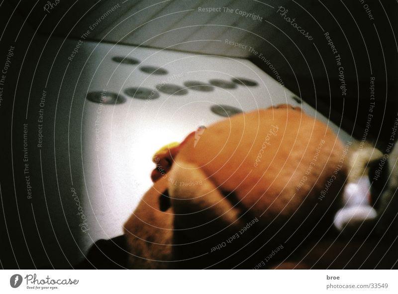 der elch Häusliches Leben Compact Disc Elch Stofftiere Kinderzimmer