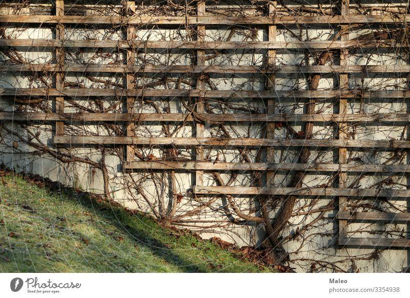 Weinrebe Architektur Hintergrundbild schön Botanik Zweig Gebäude Klettern Dekoration & Verzierung Pflanze Blume Rahmen Garten grün Wachstum Haus Efeu Blatt
