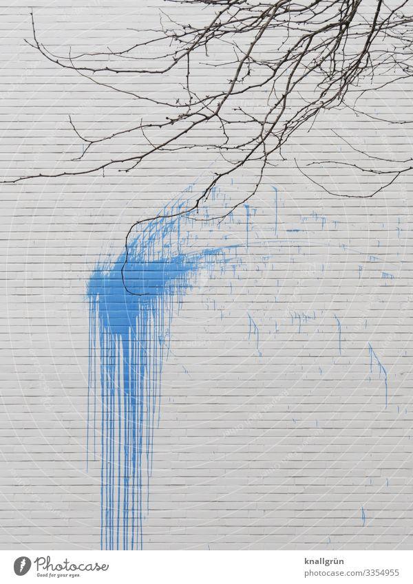 Volltreffer Pflanze blau Stadt Farbe weiß Baum Haus Winter Wand Mauer braun dreckig Kontakt Zerstörung Umweltverschmutzung Farbfleck