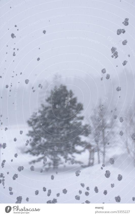 Stürmisch Natur Winter schlechtes Wetter Sturm Eis Frost Schnee Schneefall Baum Wald-Kiefer Schneeflocke Farbfoto Gedeckte Farben Menschenleer Textfreiraum oben