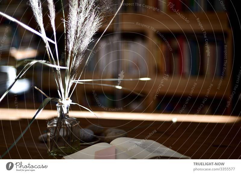Ein Sonnenstrahl fällt in die Studierstube Lifestyle Freude lesen Häusliches Leben Wohnung Innenarchitektur Dekoration & Verzierung Möbel Tisch Raum Wohnzimmer