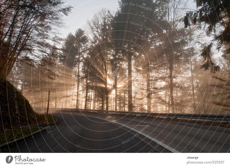Durchbruch Natur Landschaft Sommer Schönes Wetter Wald Verkehr Verkehrswege Straße Wege & Pfade Kurve fahren neu schön Stimmung Beginn Hoffnung