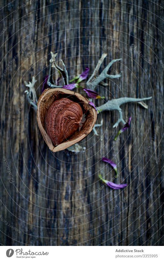 Halbgeschälte Haselnuss auf trockenen Zweigen bei Tisch braun Ernte reif Hälfte hölzern Filbert haselnussbraun Sammeln Nut Haufen Bestandteil natürlich