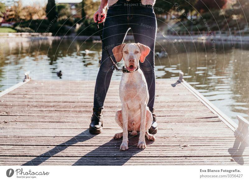 junge Frau und ihr Hund im Freien in einem Park mit einem See. sonniger Tag, Herbstsaison Jugendliche Außenaufnahme Liebe Haustier Besitzer Sonnenstrahlen schön