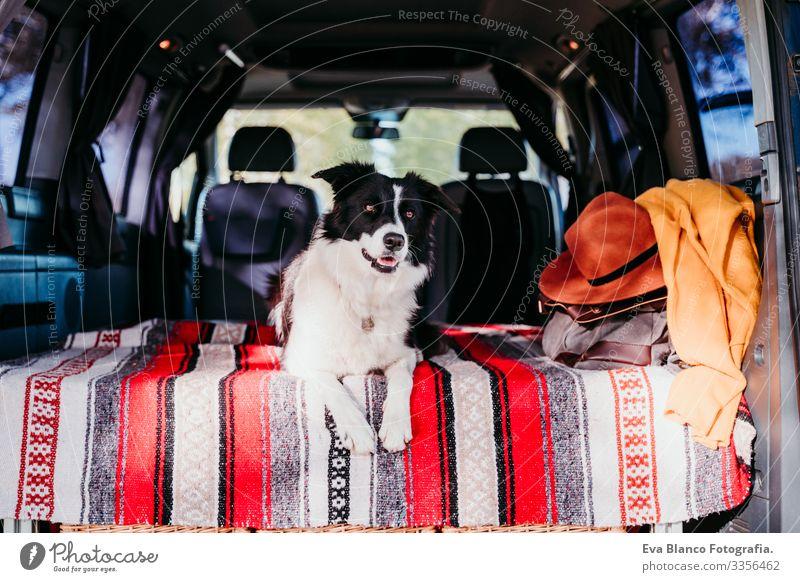 süßer Border-Collie-Hund, der sich in einem Lieferwagen entspannt. reisekonzept Freundschaft Border Collie Kleintransporter Van Leben Ferien & Urlaub & Reisen