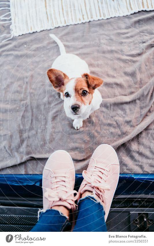 süßer jack russell hund und seine unerkennbare besitzerin frau entspannen sich in einem van. reisekonzept Jack-Russell-Terrier Hund Frau Kleintransporter