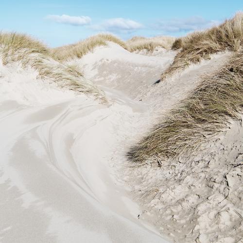 Strand Natur Landschaft Schönes Wetter wild Düne Stranddüne Sand Meer Ferien & Urlaub & Reisen Camping rau Dünengras Oregon Farbfoto Gedeckte Farben