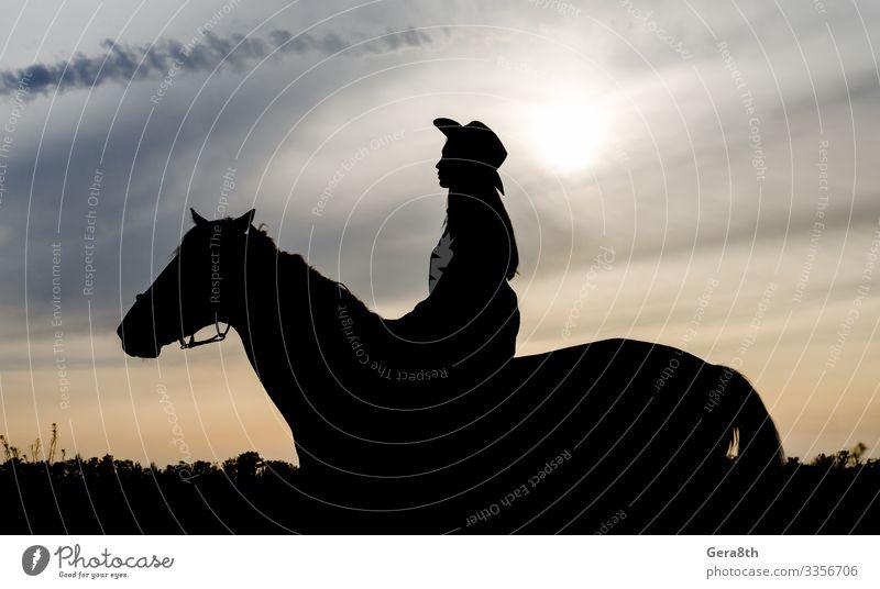 Silhouette eines jungen Mädchens mit Hut auf einem Pferd Stil Ausflug Sommer Mensch Frau Erwachsene Natur Landschaft Tier Himmel Wolken Dorf sitzen schwarz