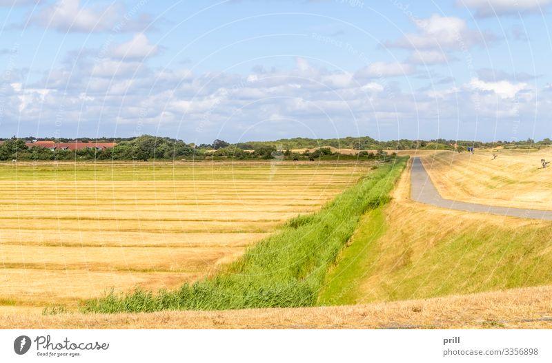 Spiekeroog in East Frisia Sommer Insel Landwirtschaft Forstwirtschaft Landschaft Wiese Küste Dorf Straße Wege & Pfade authentisch Ostfriesland