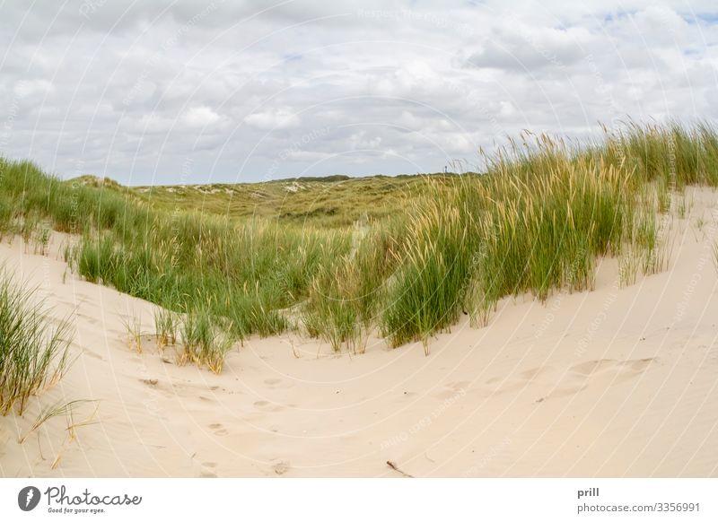 beach scenery at Spiekeroog Sommer Strand Insel Landschaft Sand Küste Nordsee authentisch sandhalm sanddüne Ostfriesland Landkreis Friesland deutschland