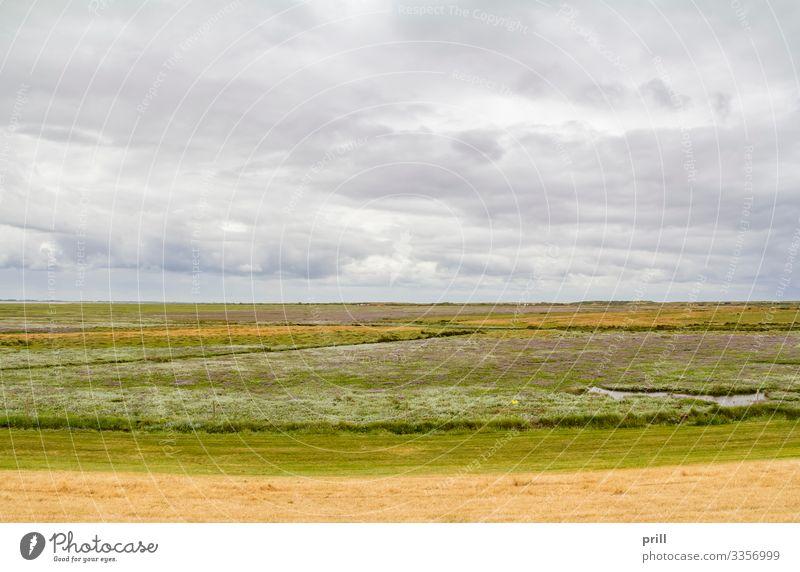 Spiekeroog in East Frisia Sommer Insel Landschaft Pflanze Sträucher Küste authentisch Ostfriesland Landkreis Friesland deutschland norddeutschland