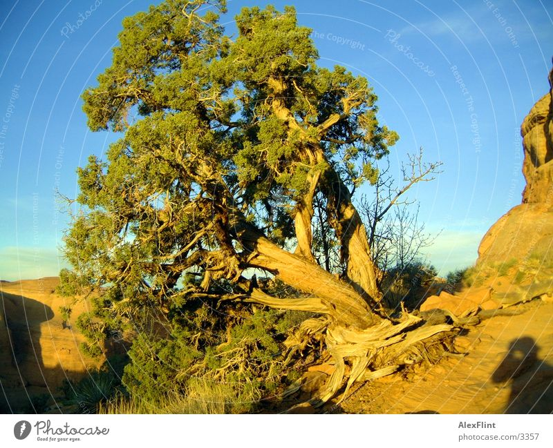 verdrehter baum Baum Ast Landschaft