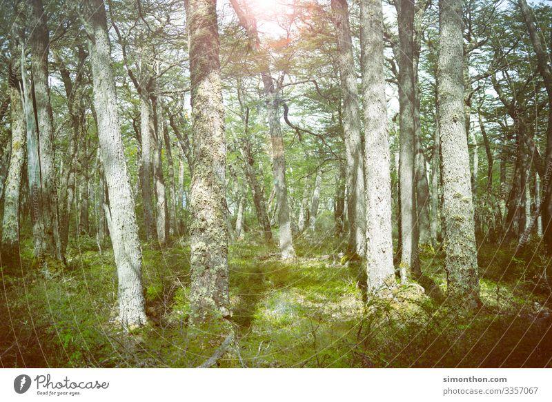 Wald Natur Landschaft Pflanze Zufriedenheit Duft Einsamkeit Erholung Freiheit Frieden nachhaltig Pause rein Ferien & Urlaub & Reisen ruhig Farbfoto