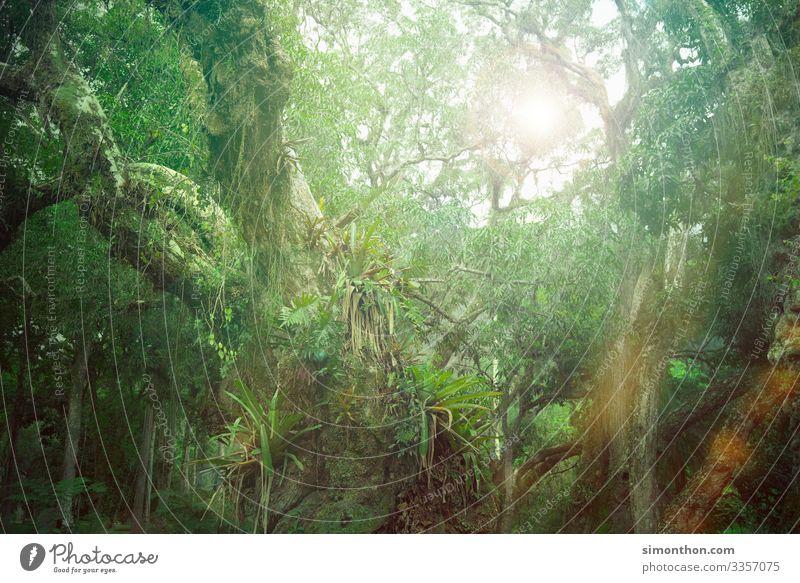 Dschungel Umwelt Natur Landschaft Pflanze Klima Urwald Amazonas Baum Kletterpflanzen CO2-Ausstoß Farbfoto Außenaufnahme