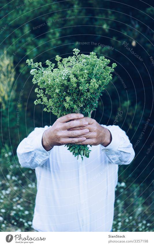 Mann hält einen Blumenstrauß oder Oregano Kräuter & Gewürze Sommer Berge u. Gebirge Garten Erwachsene Hand Natur Pflanze Blatt frisch natürlich wild grün