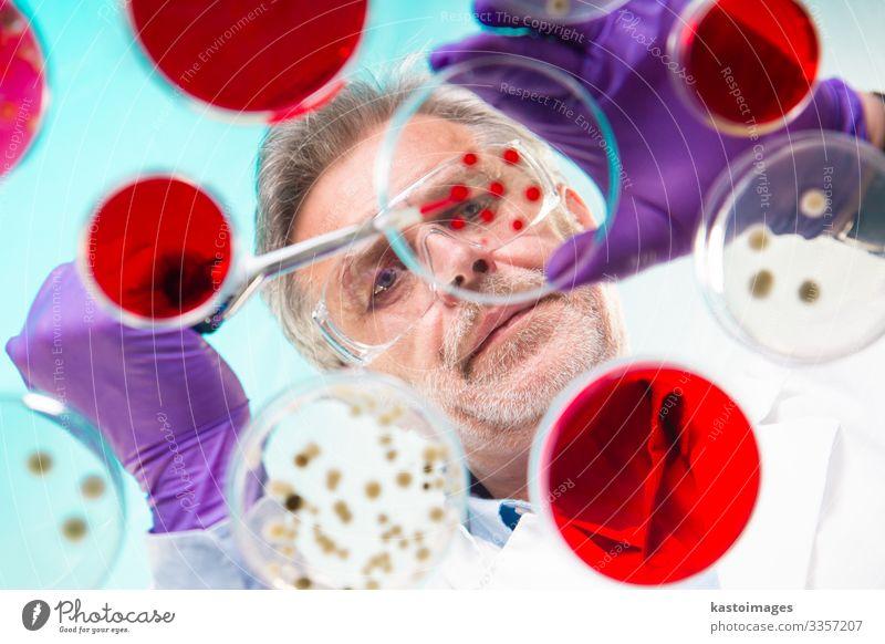 Senior-Lebenswissenschaftlerin, die Bakterien veredelt. Teller Gesundheitswesen Medikament Wissenschaften Labor Prüfung & Examen Technik & Technologie Mensch