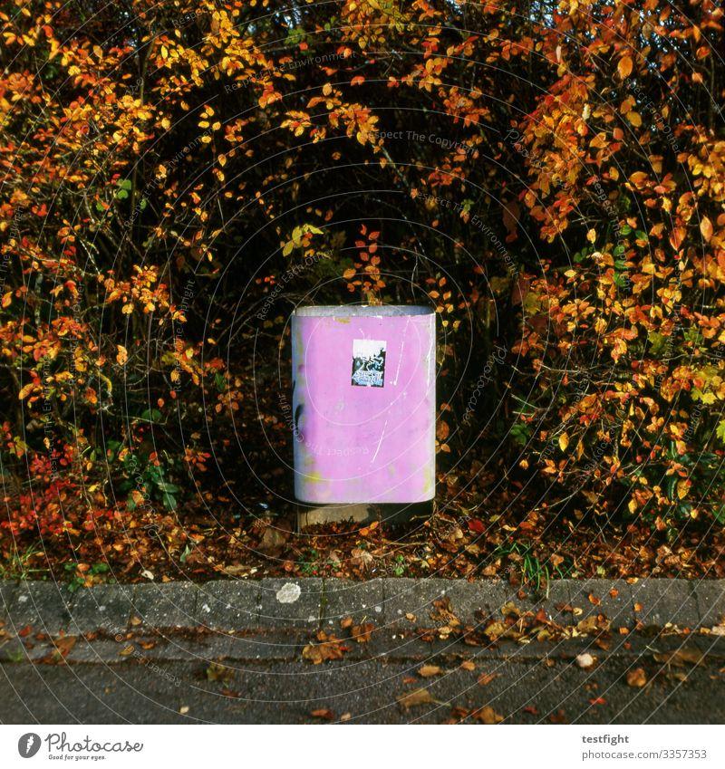 Mülleimer Öffentlich entsorgen gehweg strauch hecke herbst pink alt Graffiti