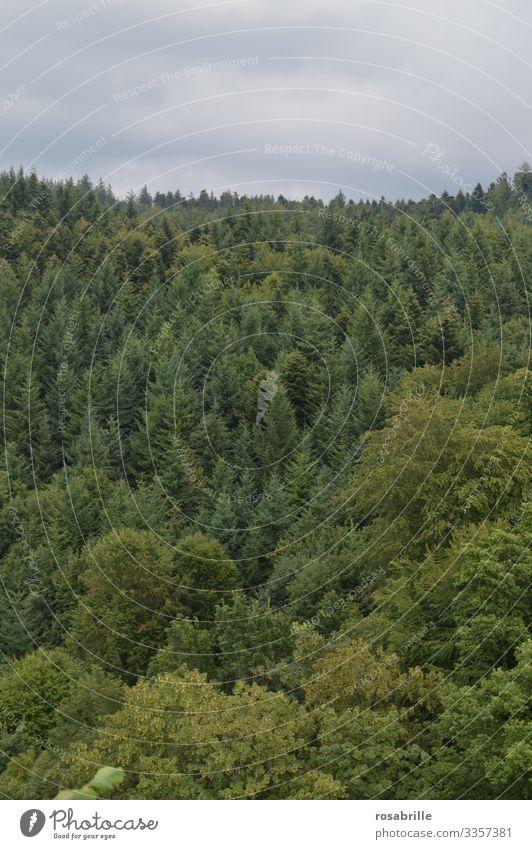 rettet unseren Wald | Klimawandel Laubbaum Nadelbaum Bäume grün Waldsterben Umweltschutz Baum wertvoll Natur draußen Holz Forstwirtschaft Naturschutz