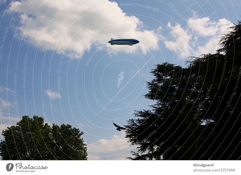 LED the ZEPPELIN fly Zeppelin Flugverkehr Greifvogel Baumkronen Top fliegen Silhouette Sommer Urlaub Ausflug gleiten Himmel Wolken Schatten Sommertag blau