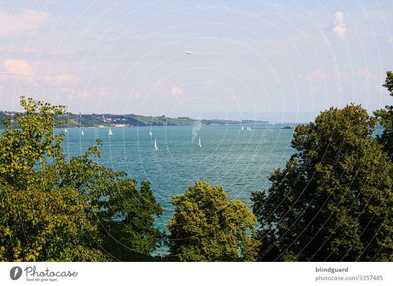 Bodensee Bäume Binnensee See urlaub reise ausflug segeln mainau wohlfühlen sommer tag sonnenschein schönes wetter zeppelin segelboot wasser wellen freizeit