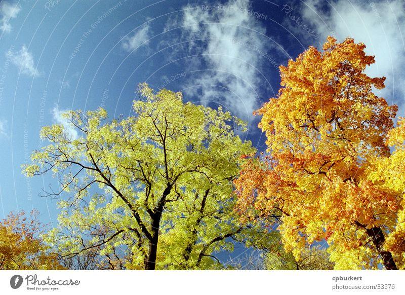 Herbstliche Bäume Himmel Blatt Wolken Stockholm